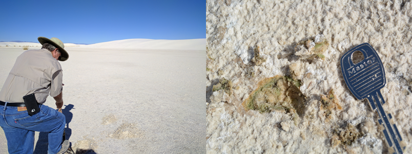 Field work in the White Sands area